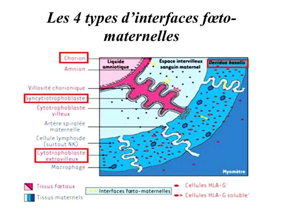 Les 4 types d'interfaces fœto-maternelles