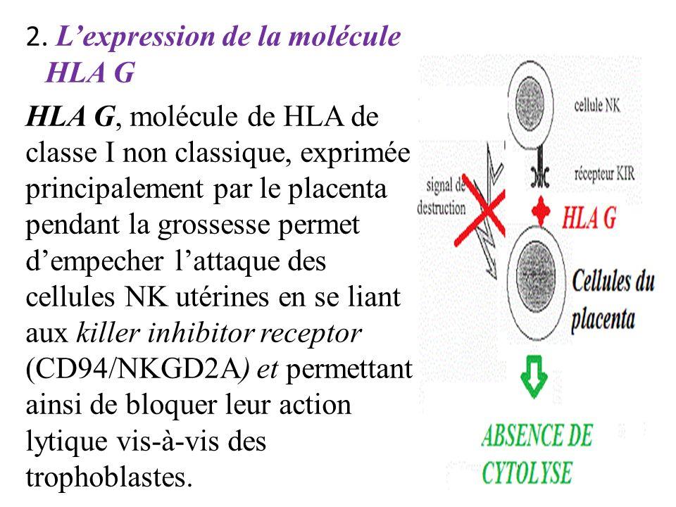 L'expression de la molécule HLA G