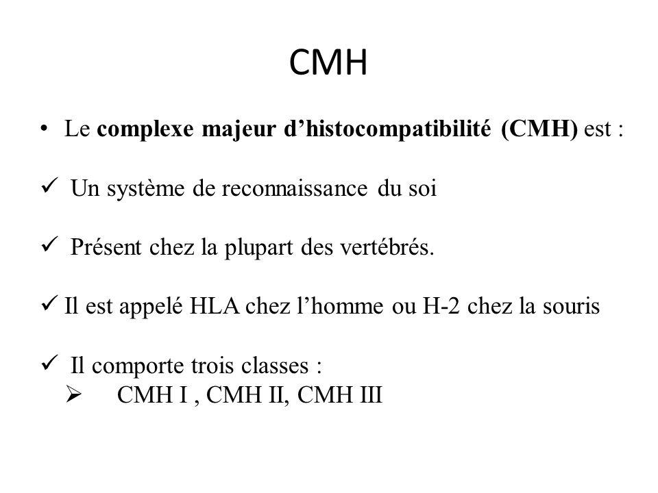 CMH Le complexe majeur d'histocompatibilité (CMH) est :
