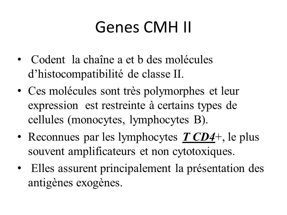Genes CMH II Codent la chaîne a et b des molécules d'histocompatibilité de classe II.