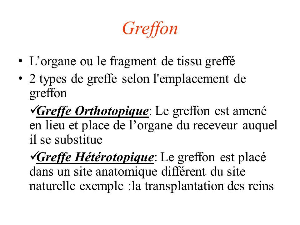 Greffon L'organe ou le fragment de tissu greffé