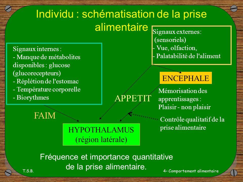 Individu : schématisation de la prise alimentaire