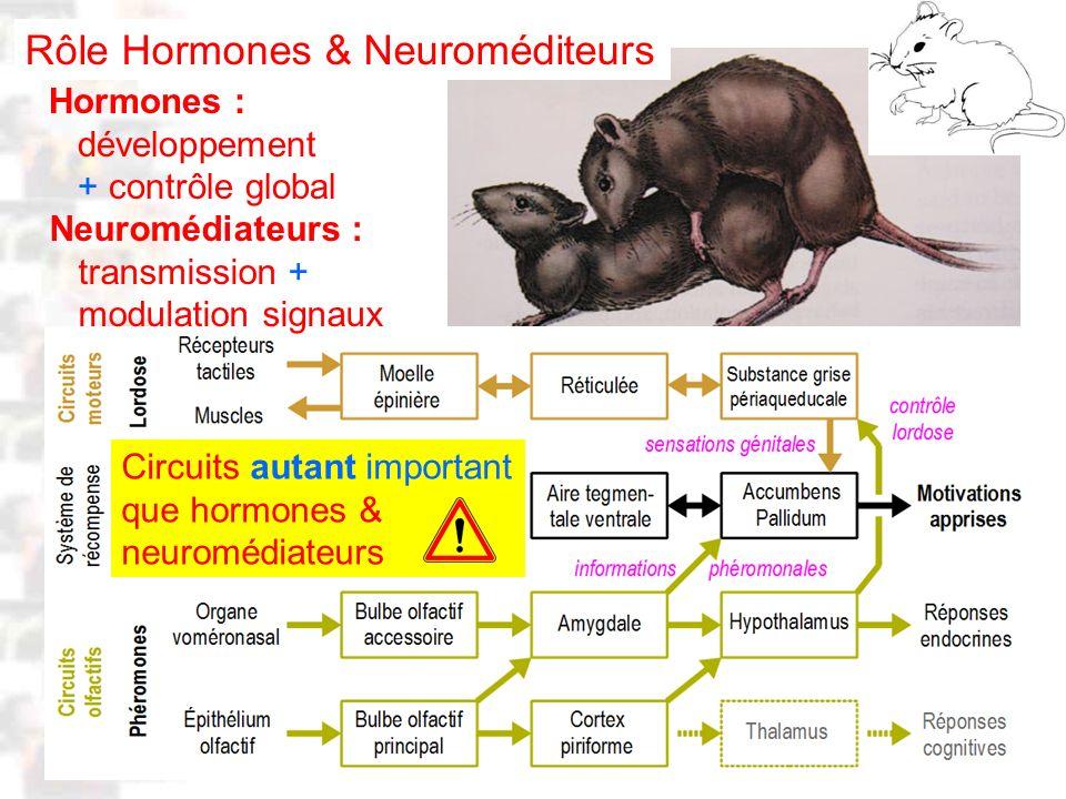 Rôle Hormones & Neuroméditeurs