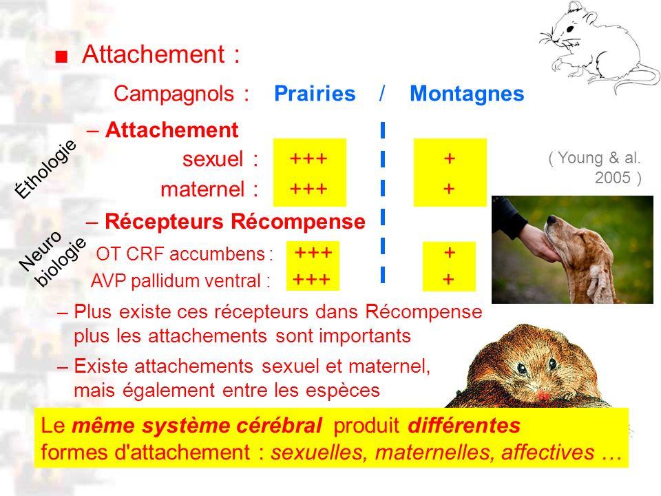 D29 : Modèles : Mammifères 21 : Attachement 1