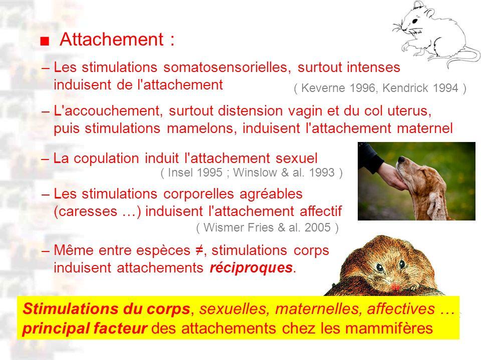 D31 : Modèles : Mammifères 21 : Attachement 2