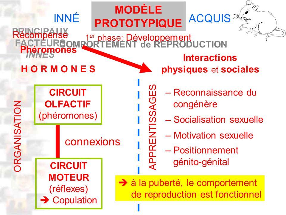 D32 : Modèles : Mammifères 22 : Synopsis 1