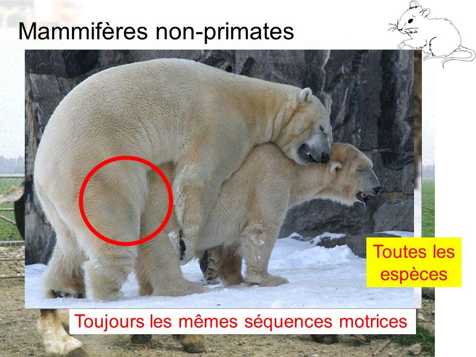 Mammifères non-primates