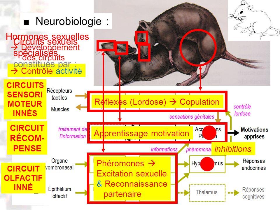 ■ Neurobiologie : Hormones sexuelles Circuits sexuels spécialisés,