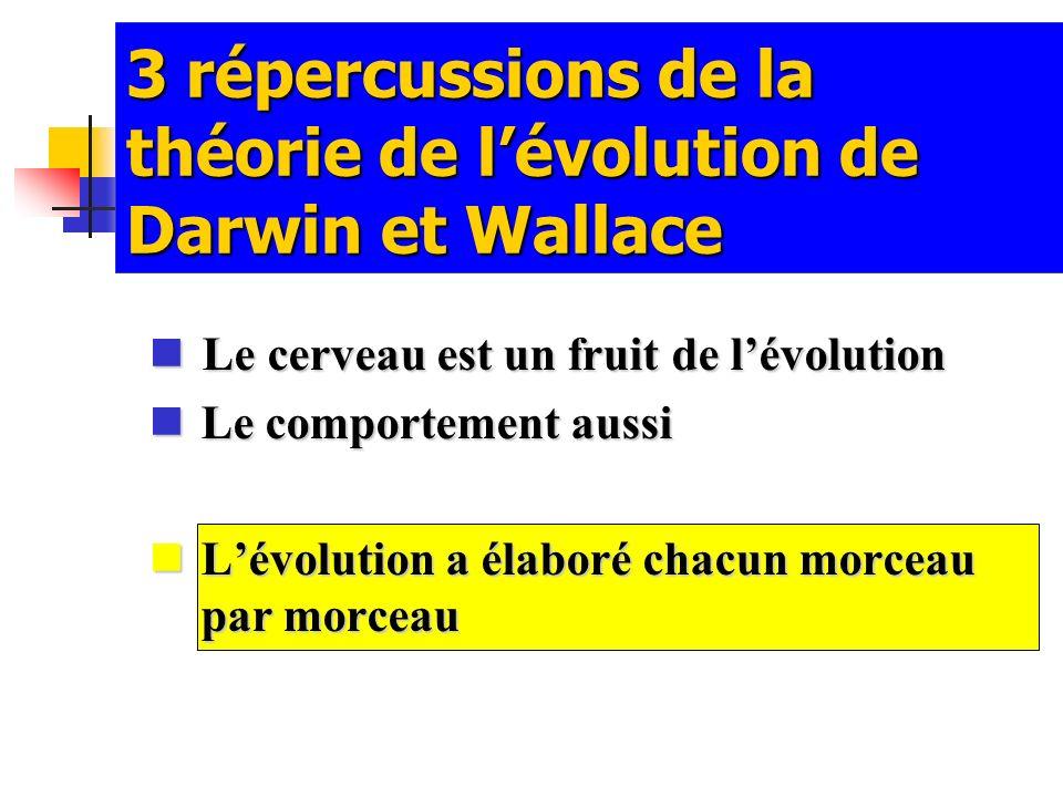 3 répercussions de la théorie de l'évolution de Darwin et Wallace