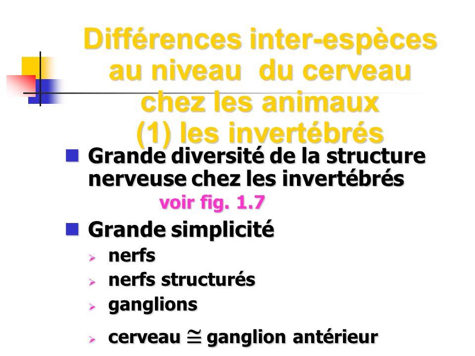 Différences inter-espèces au niveau du cerveau chez les animaux (1) les invertébrés