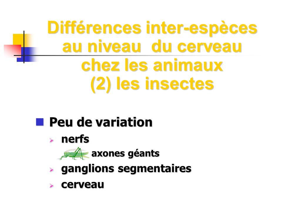 Différences inter-espèces au niveau du cerveau chez les animaux (2) les insectes