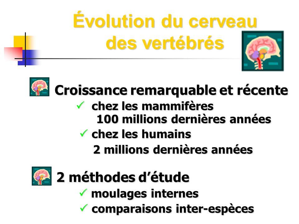 Évolution du cerveau des vertébrés
