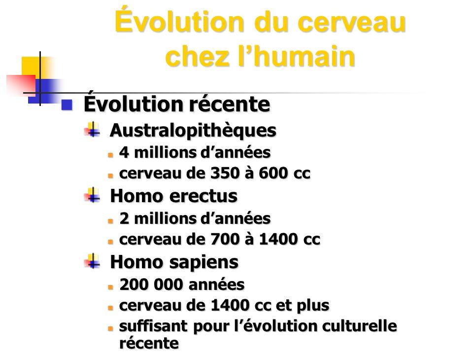Évolution du cerveau chez l'humain