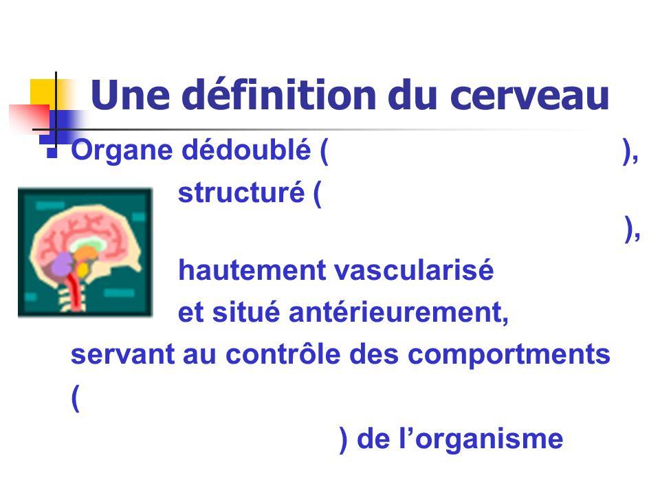 Une définition du cerveau