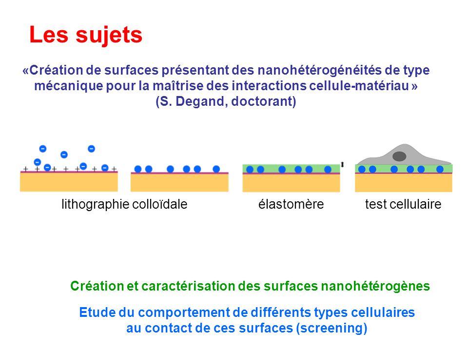 Les sujets «Création de surfaces présentant des nanohétérogénéités de type mécanique pour la maîtrise des interactions cellule-matériau »