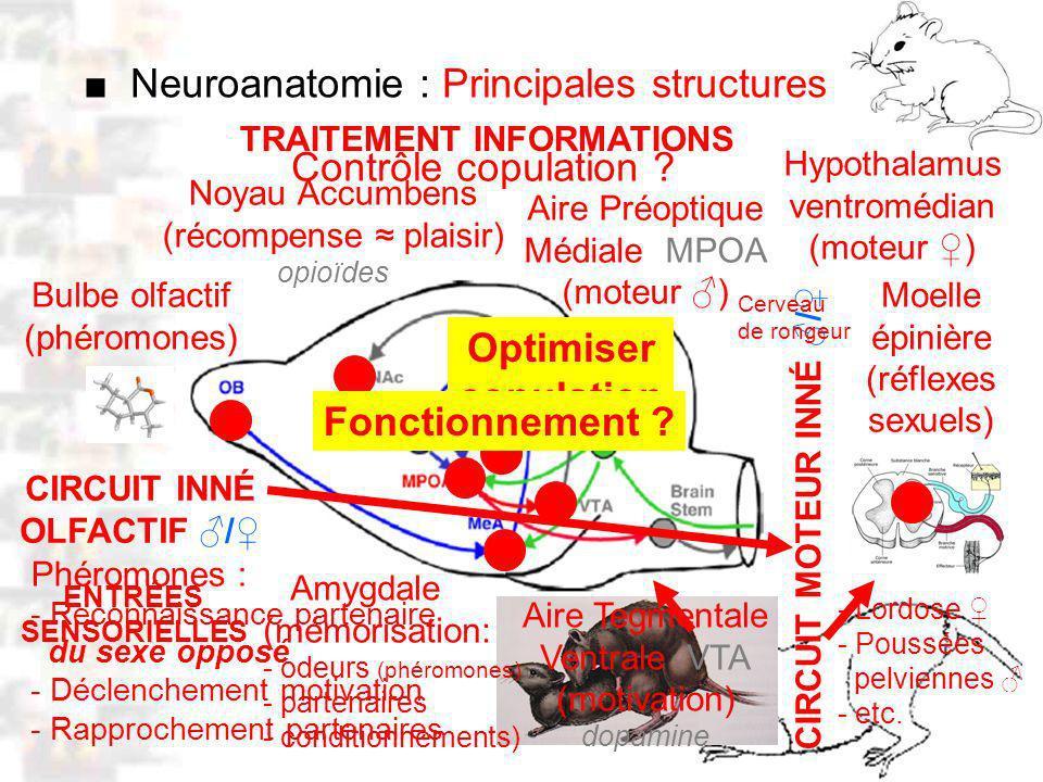 D12 : Modèles : Mammifères 5 : Neuroanatomie 1