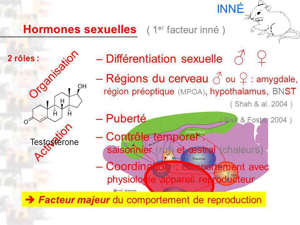D14 : Modèles : Mammifères 6 : Hormones 1