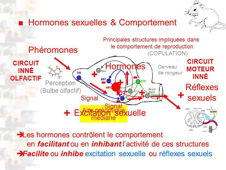 D15 : Modèles : Mammifères 7 : Hormones 2