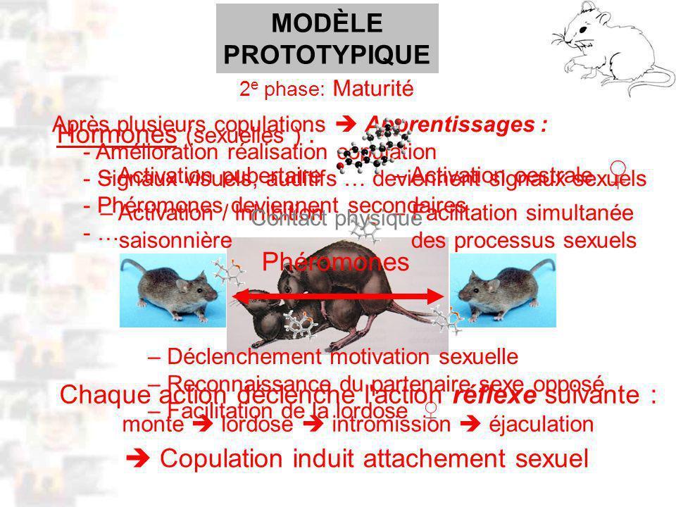 D33 : Modèles : Mammifères 23 : Synopsis 2