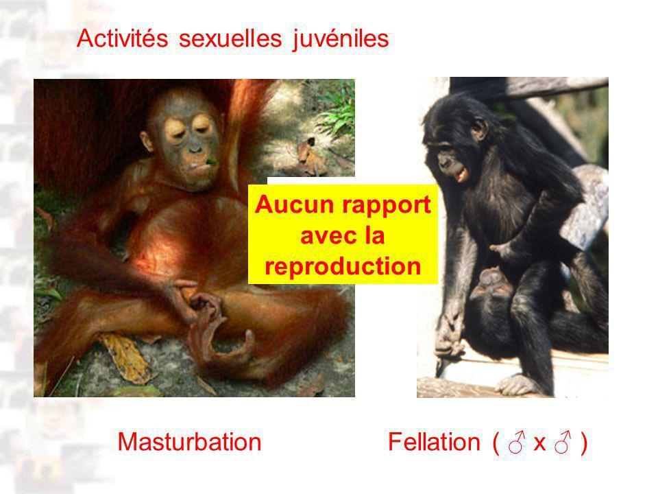 D39 : Modèles : Homme 3 : Évolution 2 : Photo 1