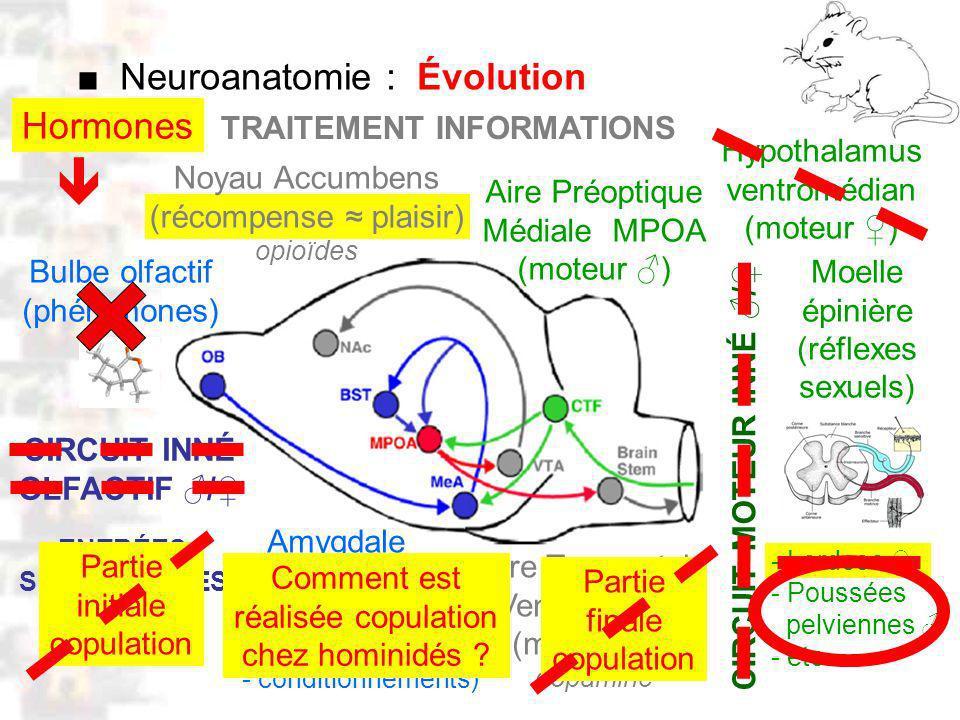 D50 : Modèles : Mammifères 5 : Neuroanatomie 1