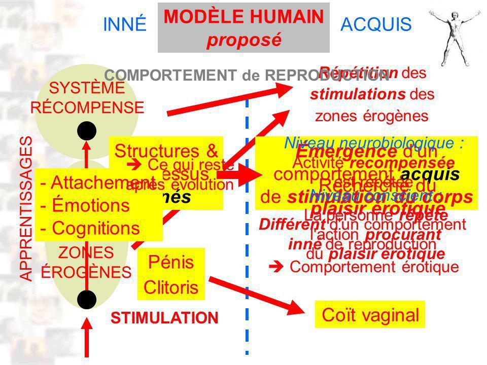 D54 : Modèles : Homme 12 : Modèle