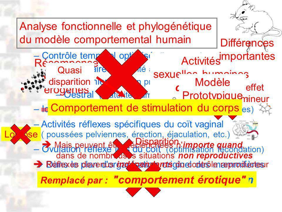 D55 : Modèles : Homme 14 : Analyse 1
