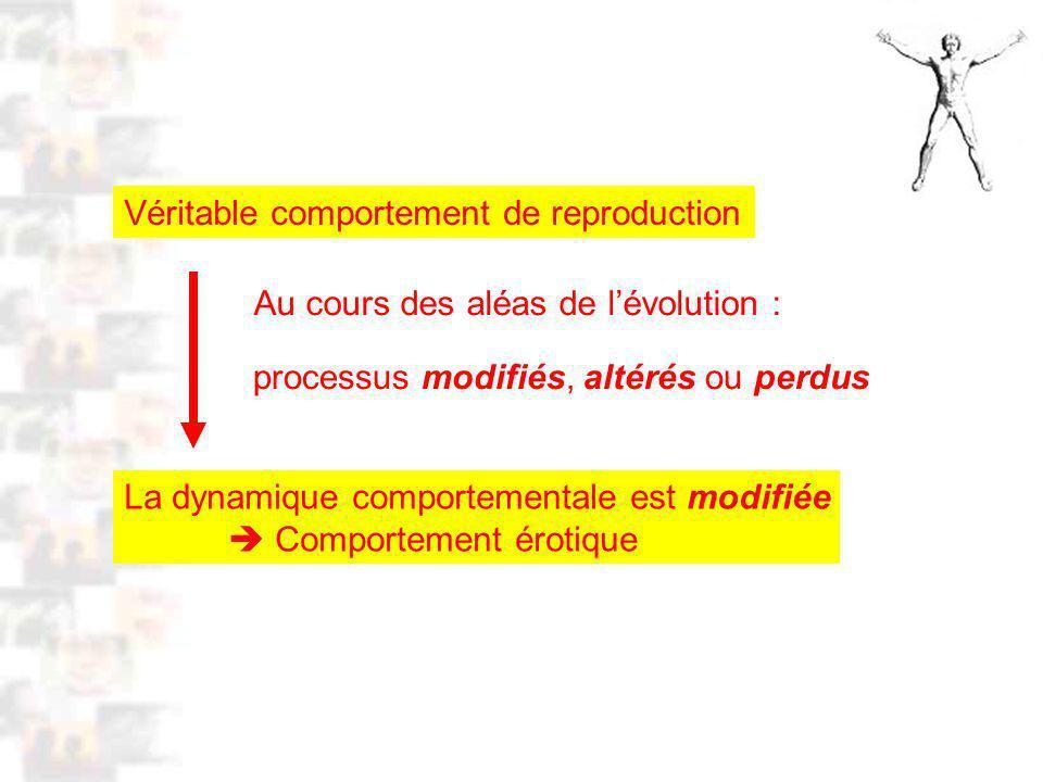 D56 : Modèles : Homme 15 : Analyse 2