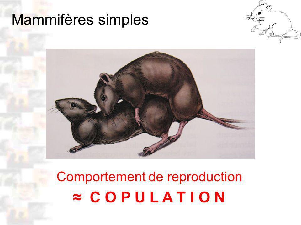 Comportement de reproduction