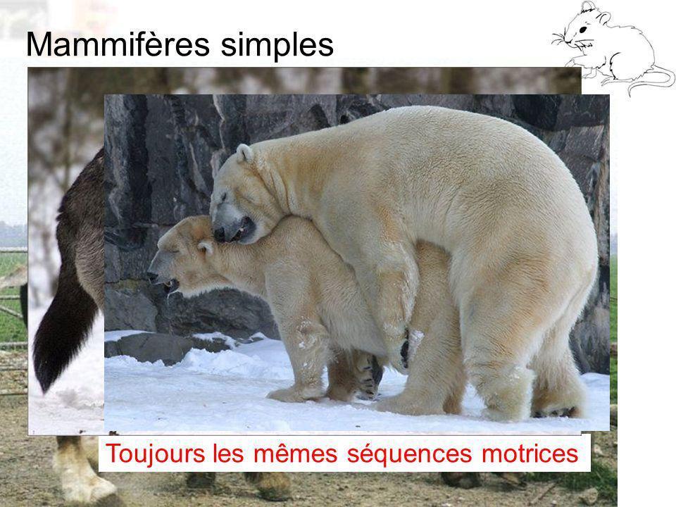Mammifères simples Toujours les mêmes séquences motrices