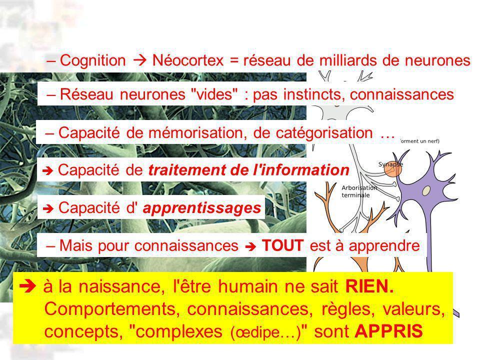 D90 : Psychobiologie : Cognition 1