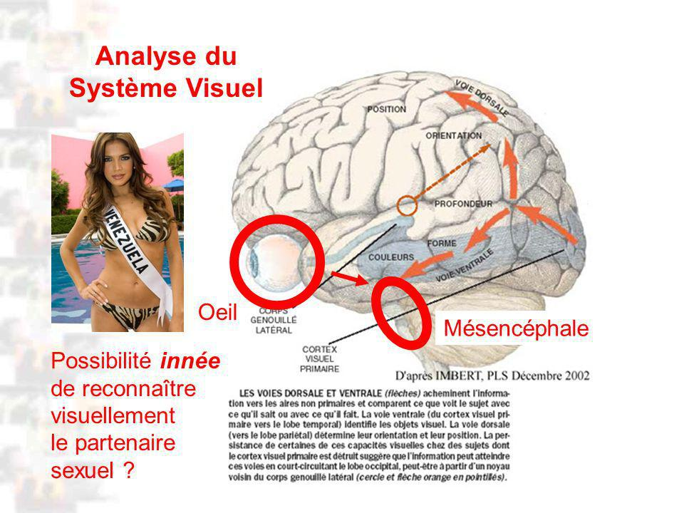 D91 : Psychobiologie : Cognition 2