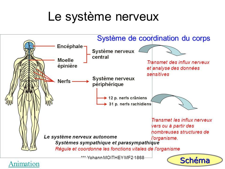 Le système nerveux Système de coordination du corps Schéma Animation