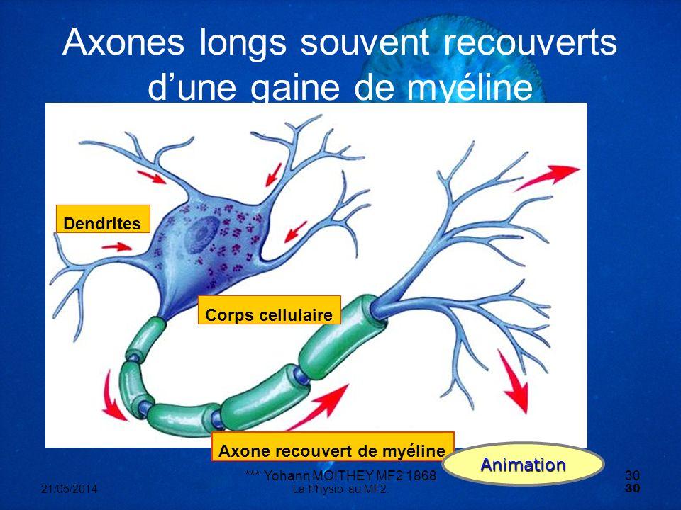Axones longs souvent recouverts d'une gaine de myéline