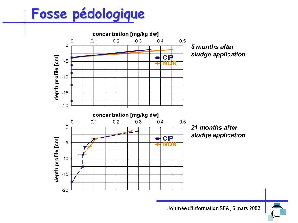 Fosse pédologique