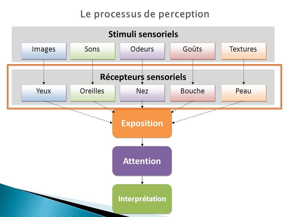 Le processus de perception