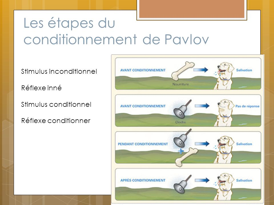 Les étapes du conditionnement de Pavlov