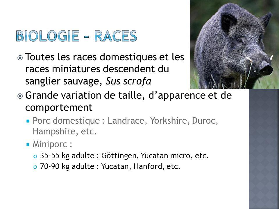 Biologie – Races Toutes les races domestiques et les races miniatures descendent du sanglier sauvage, Sus scrofa.