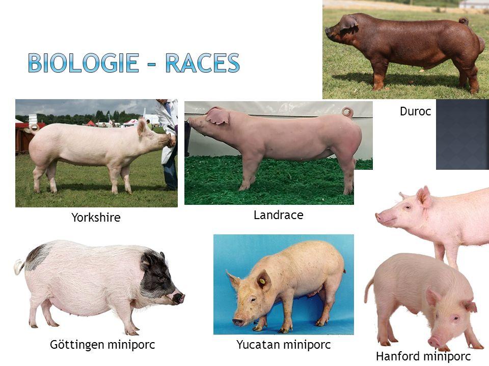 Biologie – Races Duroc Yorkshire Landrace Göttingen miniporc