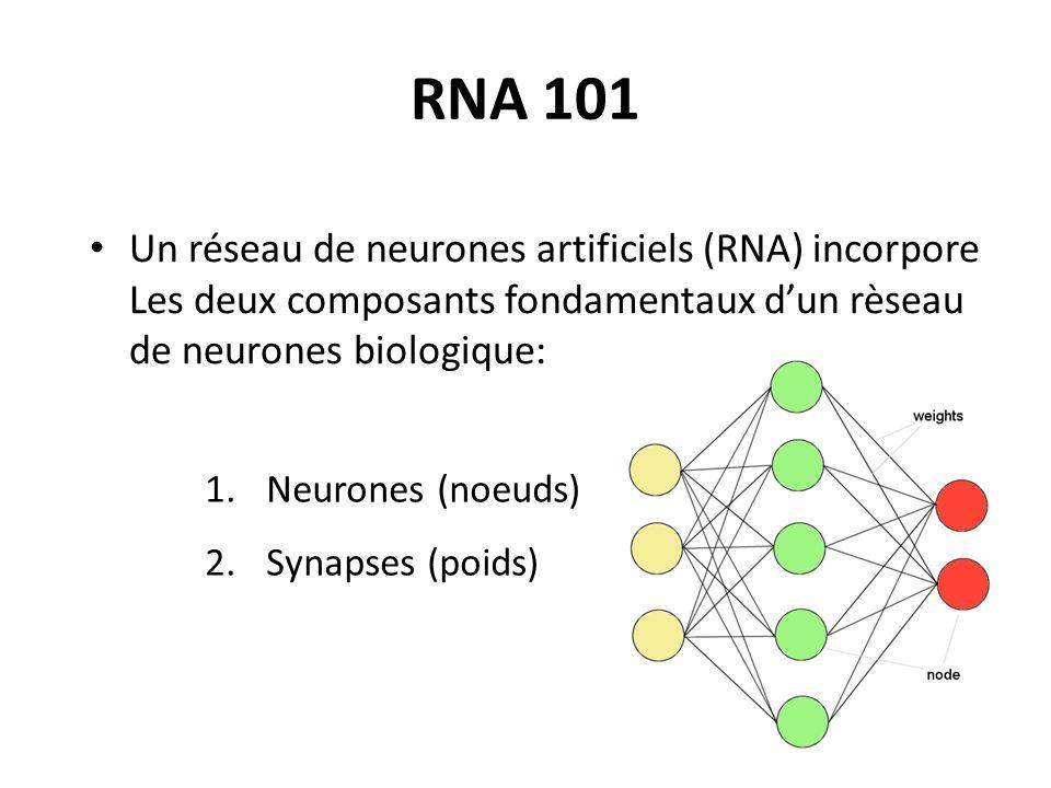 RNA 101 Un réseau de neurones artificiels (RNA) incorpore Les deux composants fondamentaux d'un rèseau de neurones biologique:
