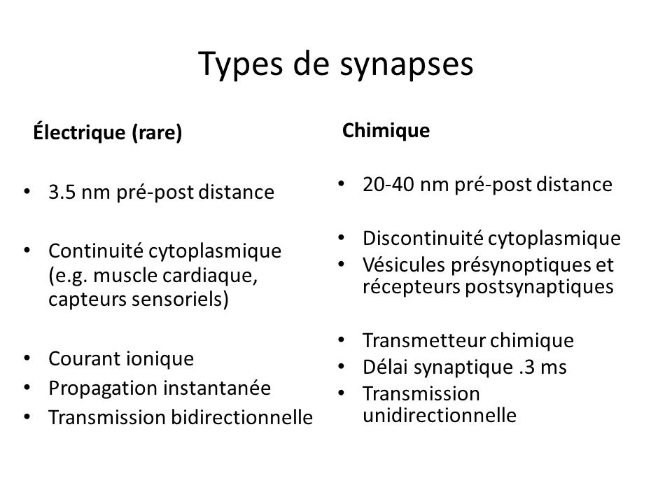 Types de synapses Électrique (rare) 3.5 nm pré-post distance