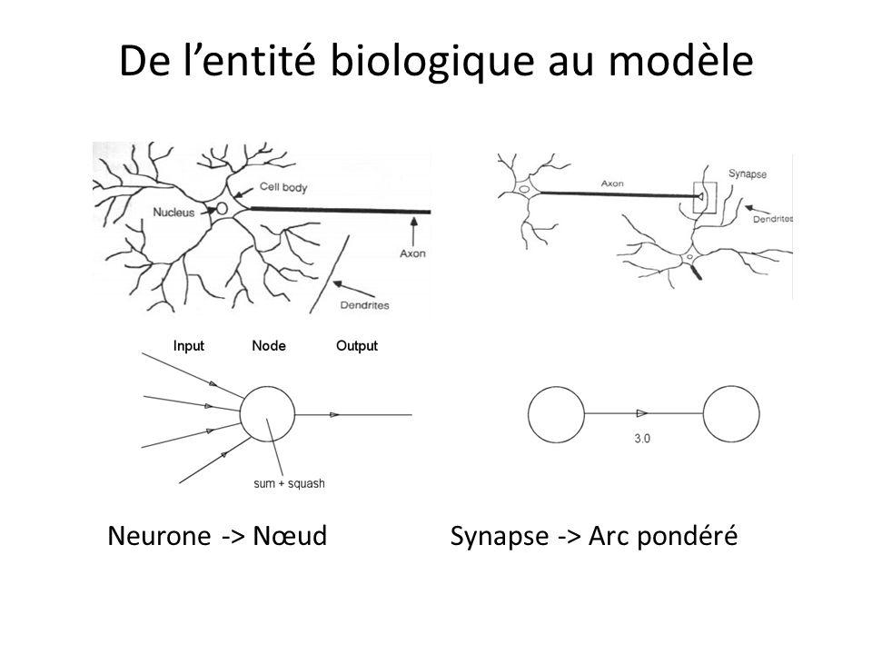 De l'entité biologique au modèle