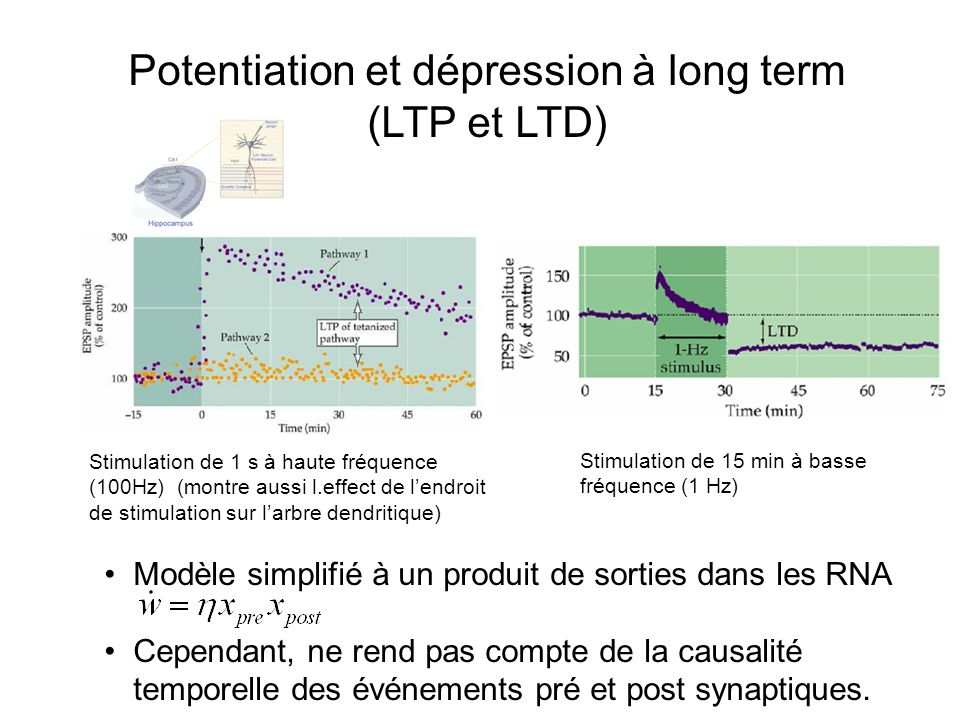 Potentiation et dépression à long term (LTP et LTD)