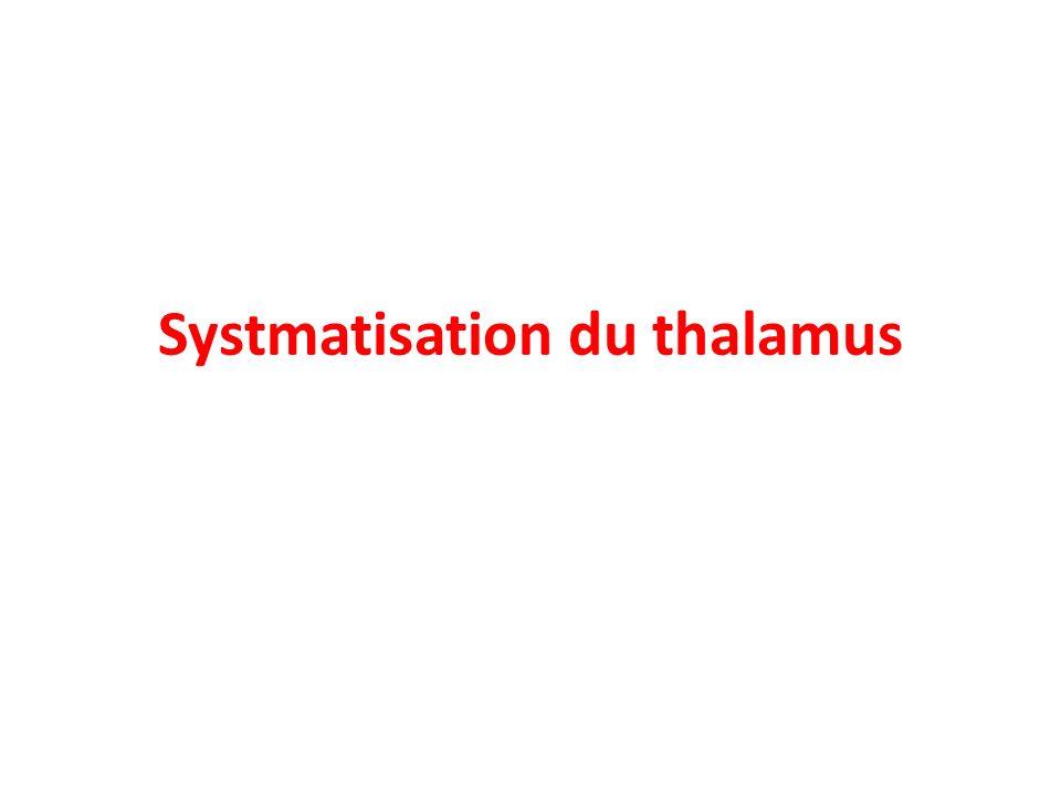 Systmatisation du thalamus