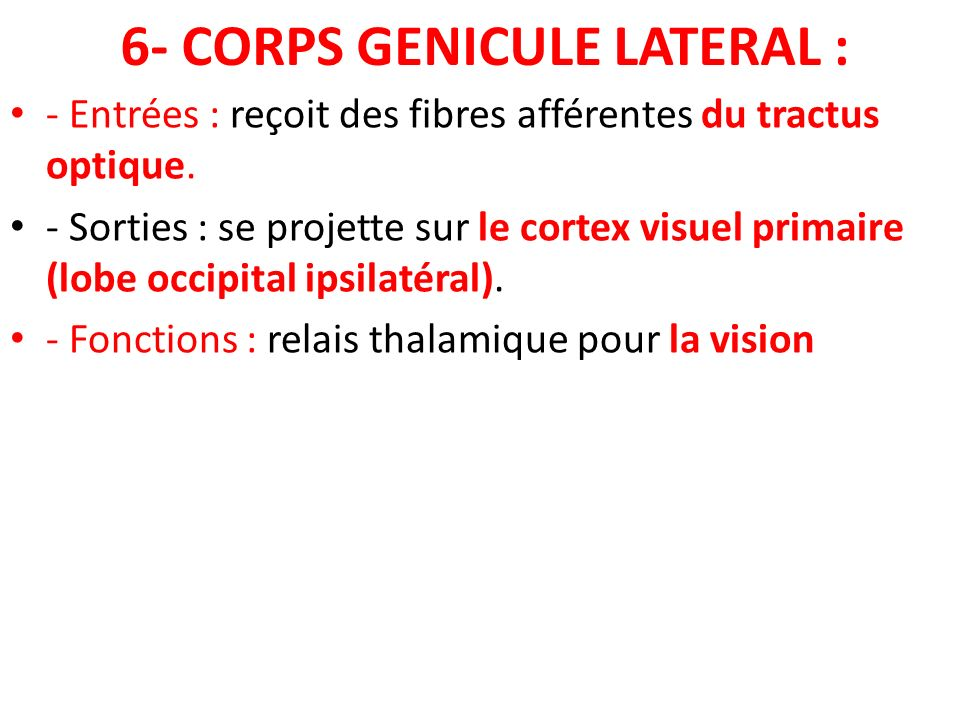 6- CORPS GENICULE LATERAL :