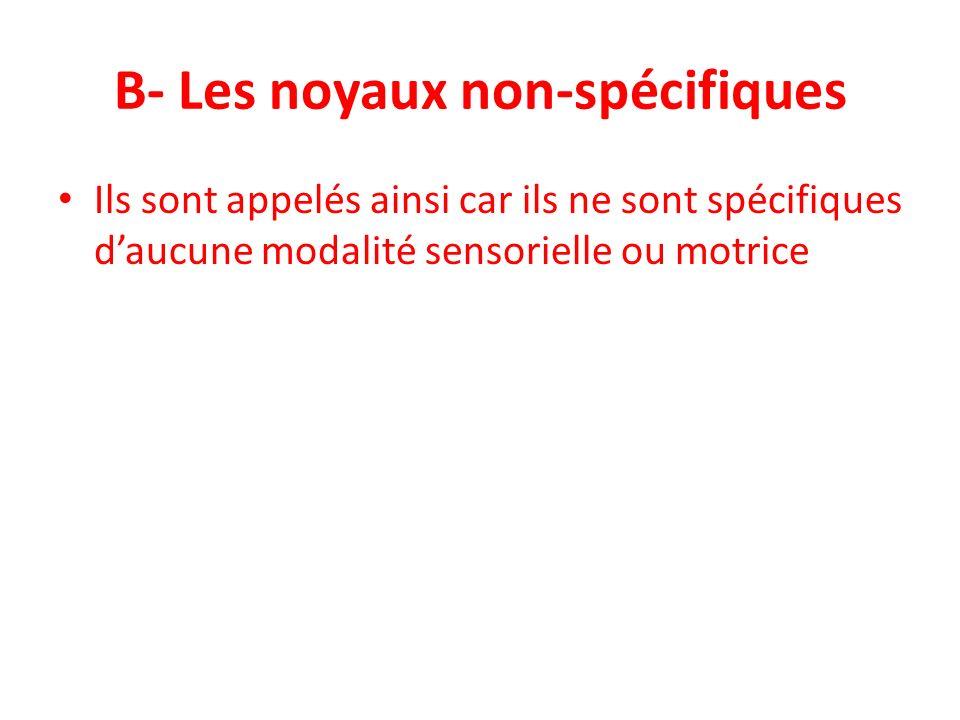 B- Les noyaux non-spécifiques
