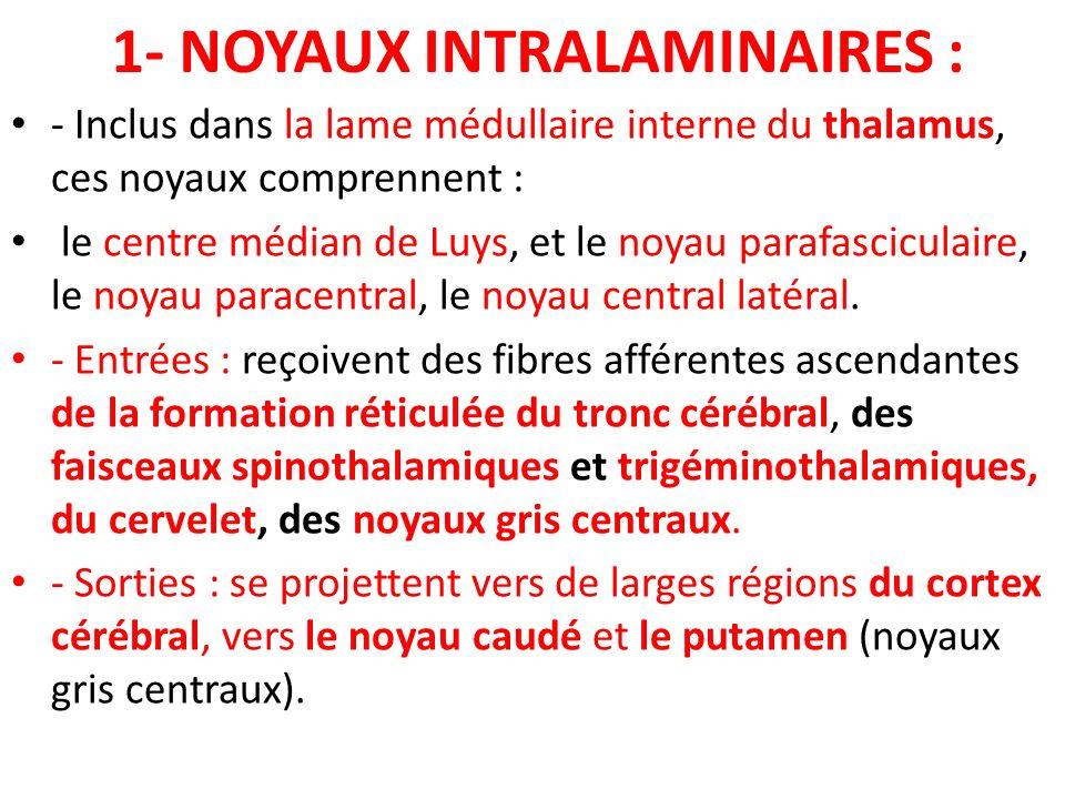 1- NOYAUX INTRALAMINAIRES :