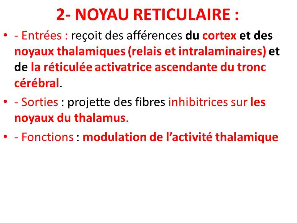 2- NOYAU RETICULAIRE :