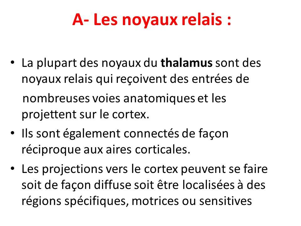 A- Les noyaux relais : La plupart des noyaux du thalamus sont des noyaux relais qui reçoivent des entrées de.