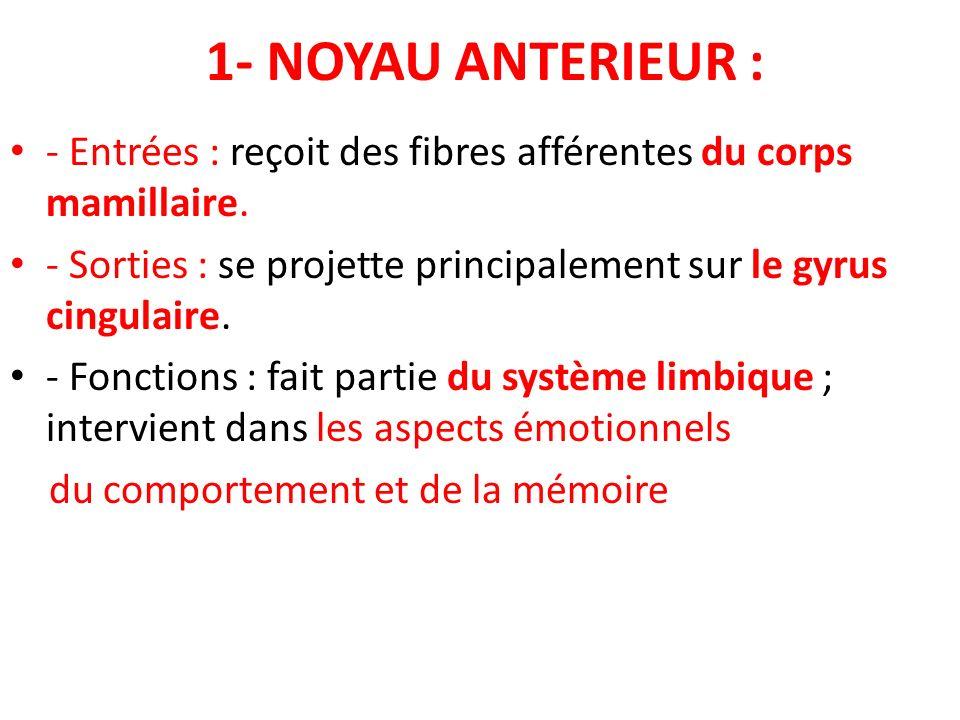 1- NOYAU ANTERIEUR : - Entrées : reçoit des fibres afférentes du corps mamillaire. - Sorties : se projette principalement sur le gyrus cingulaire.